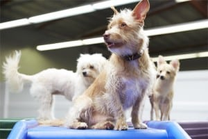 Doggie Daycare Small Dogs