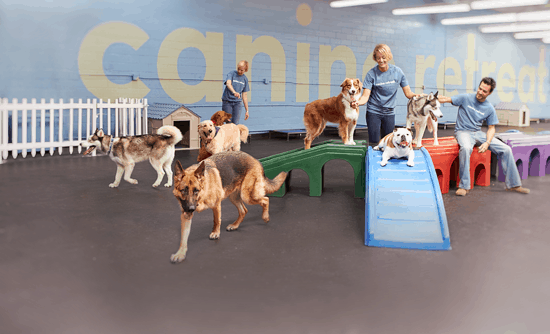 Dog daycare canine retreat dog daycare boarding for What is dog boarding