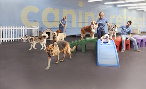 Announcing the launch of canine retreat doggie daycare for Best doggy day care