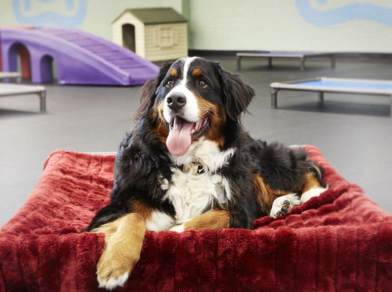 Canine Retreat Dog Daycare And Boarding
