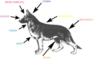 canine reiki