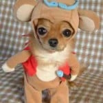 cute dog in costume
