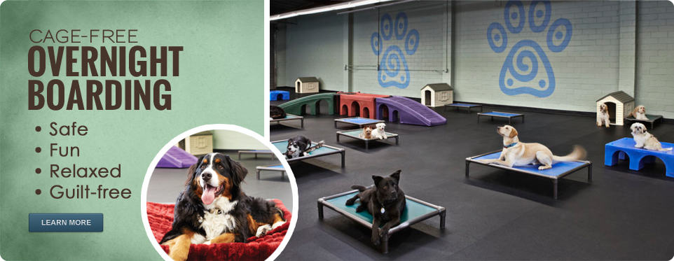 Canine Retreat – Dog Daycare & Boarding